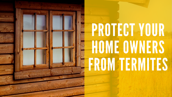 Protect your Homeowners from Termites